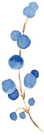 Bleuets02