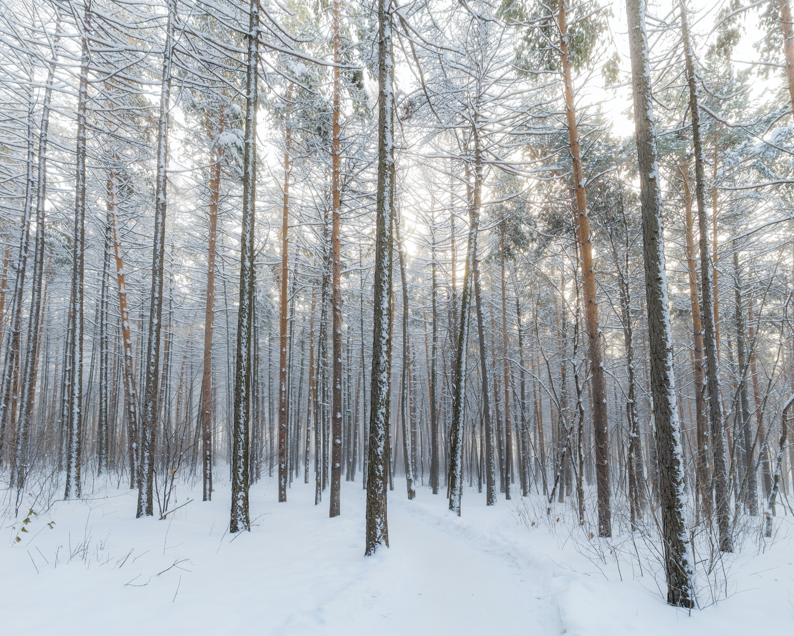 Foret_Hiver