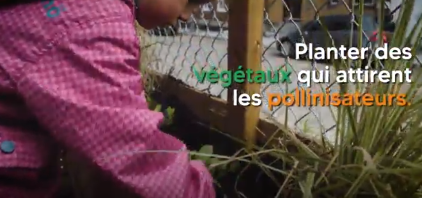 Verdissement_Bienfaits_Video_BiodiversiteUrbaine